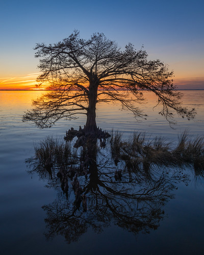 tree cypress shiloette sunset sunsetssunrises color reflection duck ducknc outerbanks outer banks water mirror nikon d850 nikond850 sir sirui siruitripods