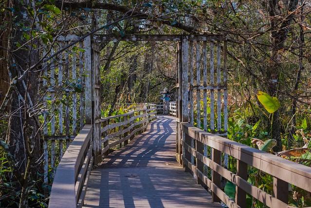 Naples, Florida - Corkscrew Swamp - Boardwalk Gateway to Corkscrew Swamp
