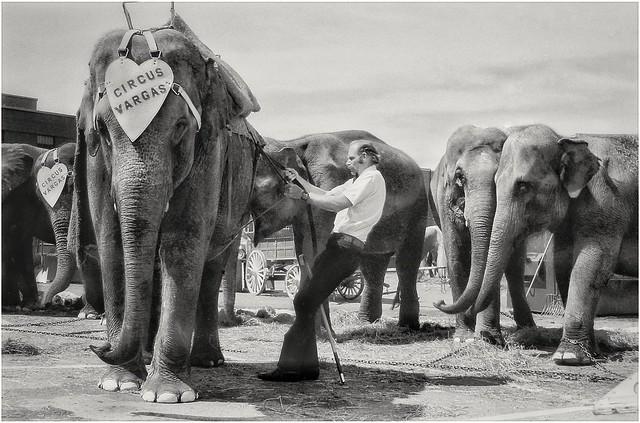 circus backlot  1969