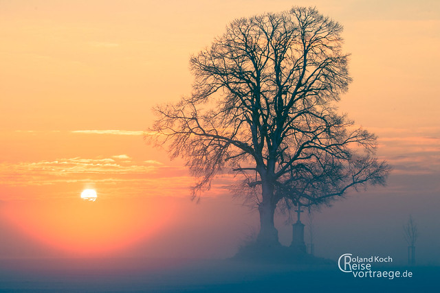Cold Winter Sunset at a Lime tree