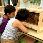 Learning about bees at Tamarack
