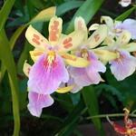 Orchid festival Kew Gardens