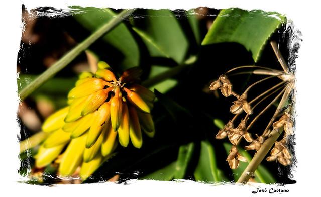 IMG_2263_Flowers
