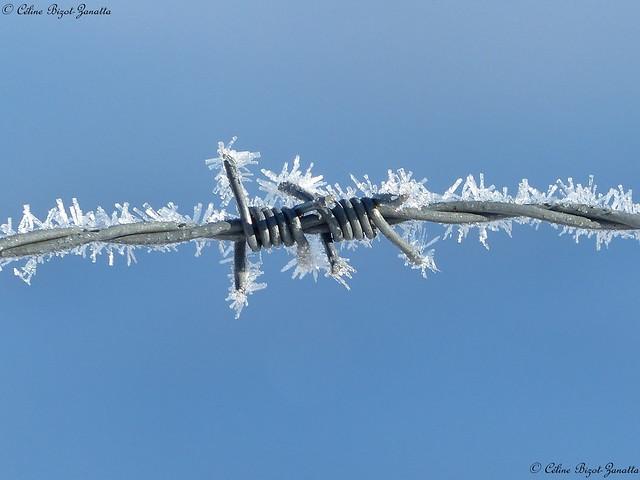 Un hiver qui ne manque pas de piquant !