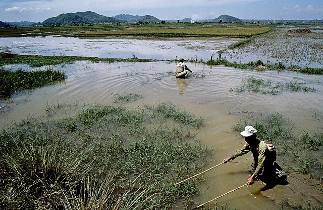 Electricity fishing, Dalat, Vietnam