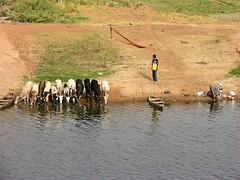Multiple water uses in Dam, Burkina Faso