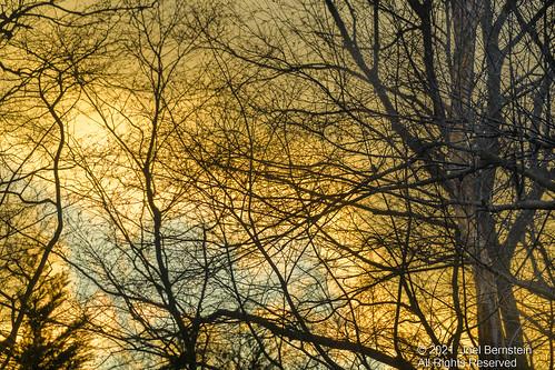 yellow blue unitedstatesofamerica colorful silhouette sunset backyard woods forest nature newyork home northamerica longisland oysterbaycove li ny us usa unitedstates trees