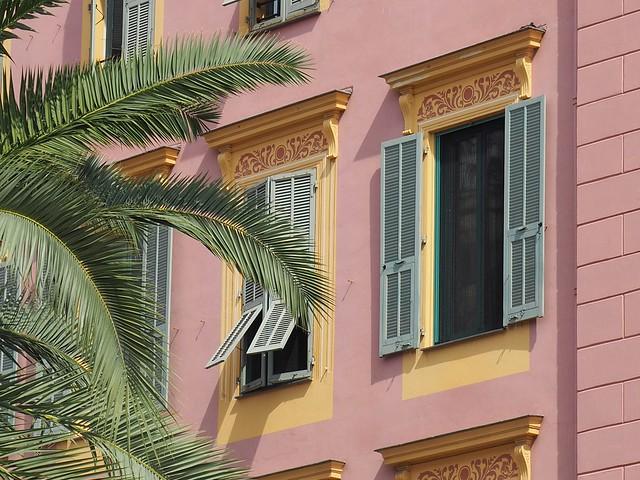 Un palmier à Nice..A palmtree in Nice