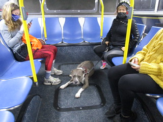 DOGS OF MUNI: MOJO