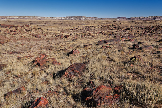 Nature Beauty Springs Eternal (Petrified Forest National Park)