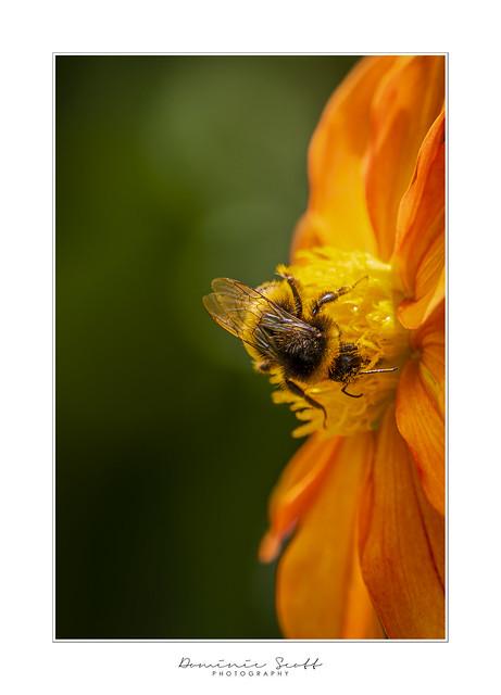 Bee-utiful Pollen Party