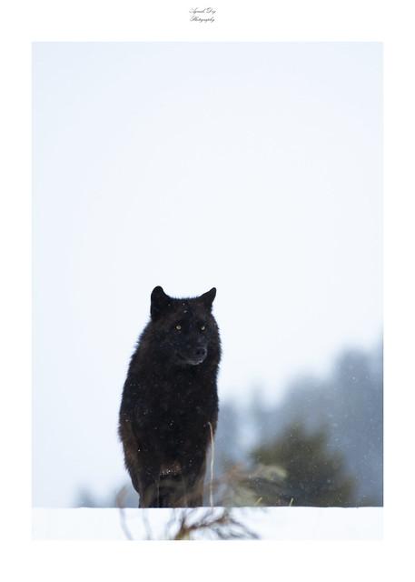 Guardian of Wilderness
