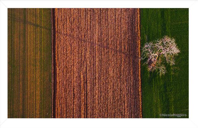 Lines and Tree © Nicola Roggero