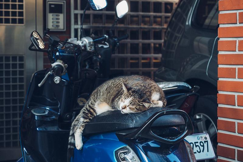 Cat|阿喵
