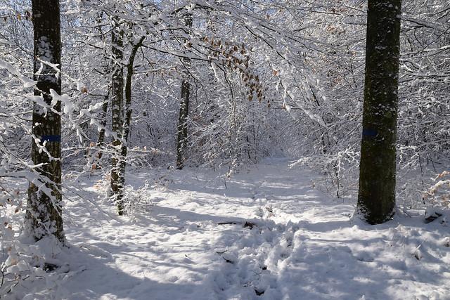 Magie de l'hiver_2