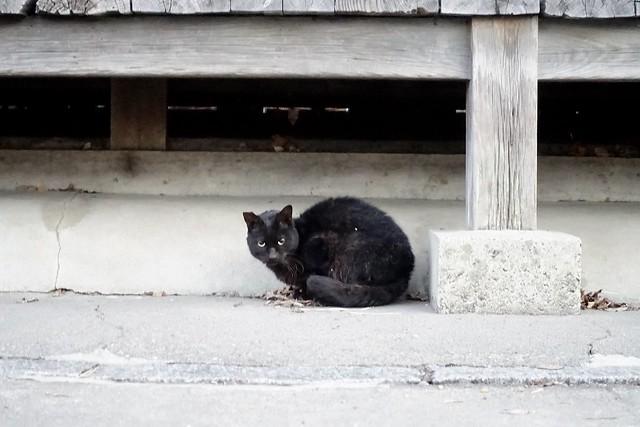 Today's Cat@2021−01−23