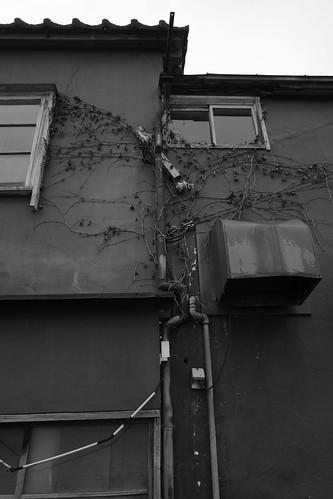 niigata monochrome 99