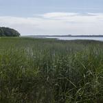 Saukas ezers, 20.06.2020.