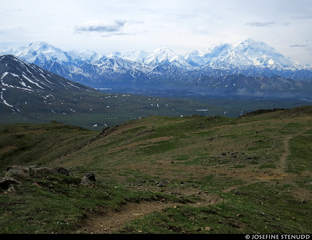 20180704_40 Denali seen from the Eielson Alpine Trail | Eielson Visitor Center in Denali National Park & Preserve, Alaska