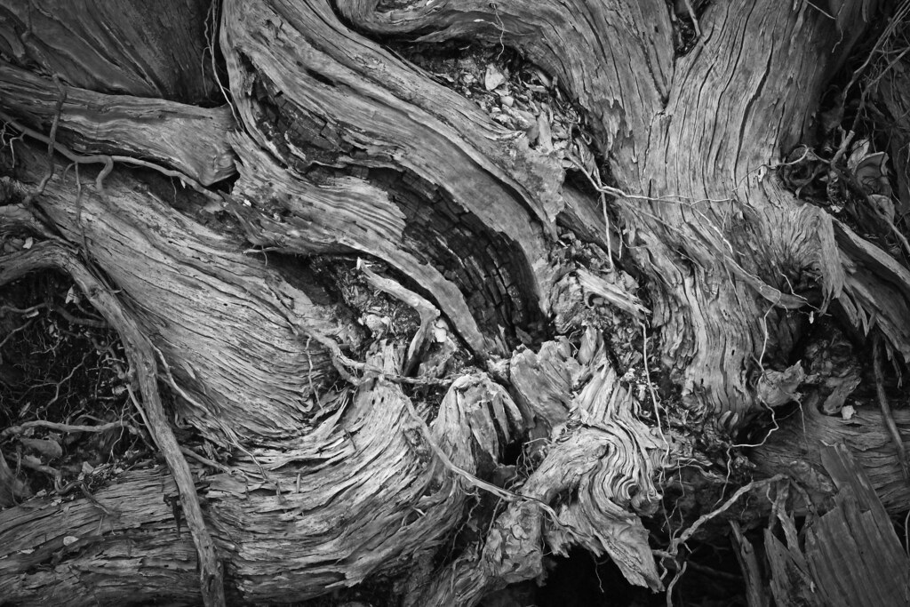 2021.01.09 Shired Island Trail Roots 2 BW