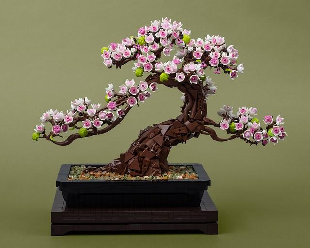 桜盆栽 (Sakura Bonsai)