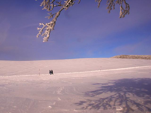 The Winter Walkers