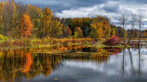 Autumn Reflections | by David Hamments
