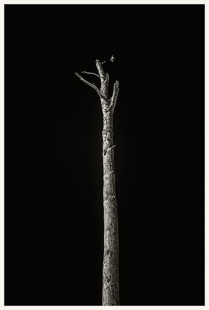 Lake Woodruf IR #4 2021; Dead Pine & Bird