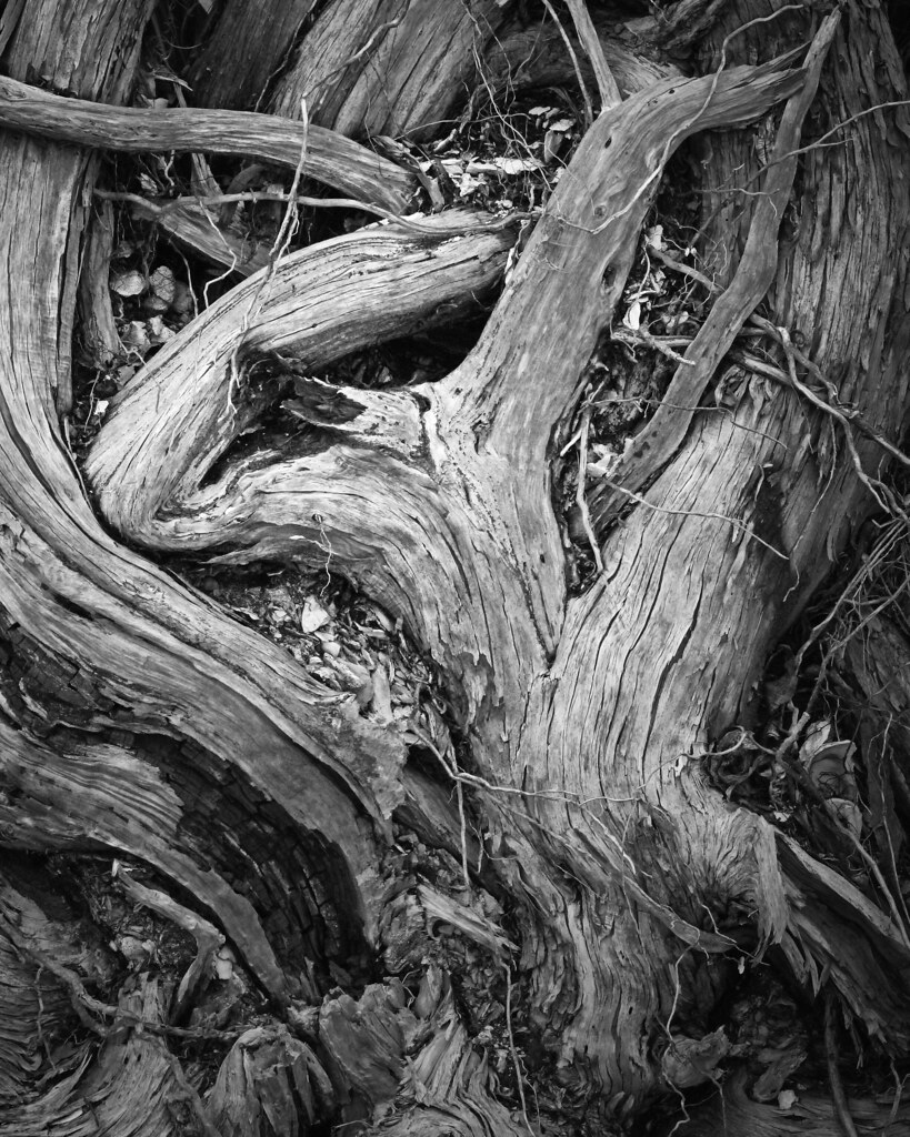 2021.01.09 Shired Island Trail Roots 3 BW