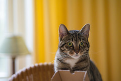Cat with Macro Lens