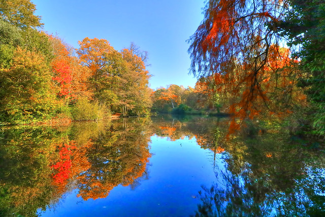 Autumn at Holly Hill Country Park, Hampshire