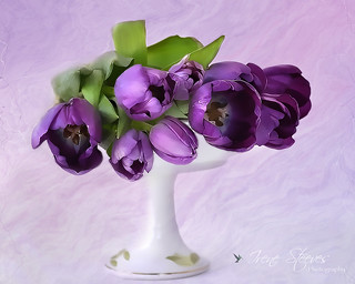Mini Tulips Still Life