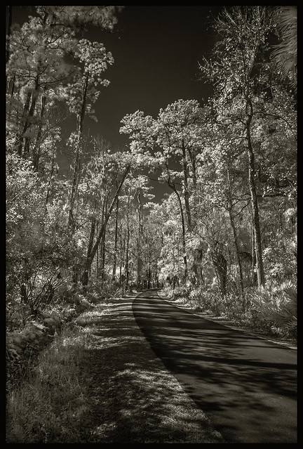 Lake Woodruff IR #6 2021; Road Through the Swamp