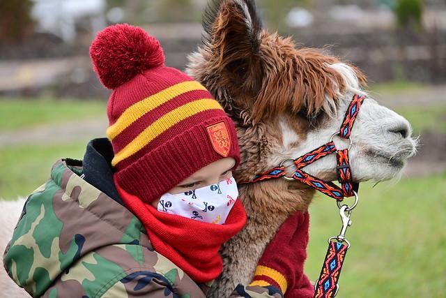 grandson and alpaca :)
