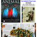 Animal, The Definitive Visual Guide by David Burnie - DK PUBLISHING