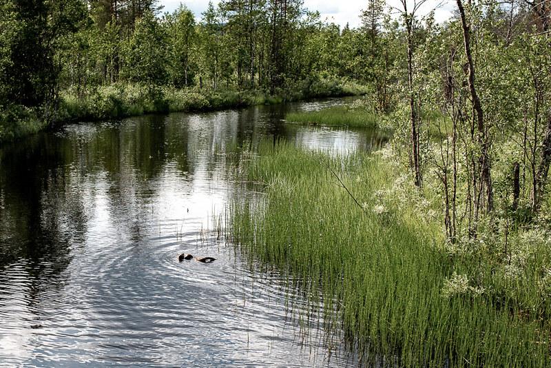 Kesänkijärvi, Kesänkijoki