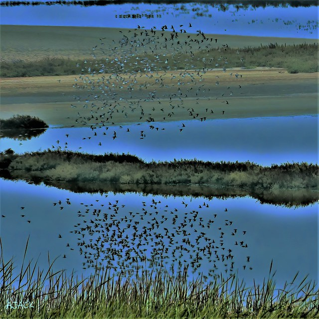 Birds_Over Water_Reflection