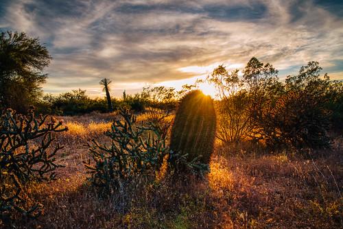 cactus barrel desert sunset mcdowell sonoran preserve scottsdale arizona