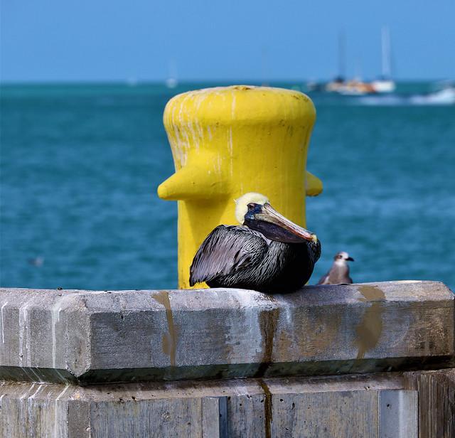 Quiet Harbor Moment