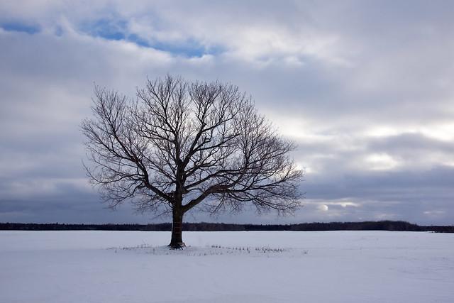 Tombée du jour dans le silence hivernal
