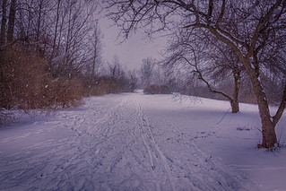 Day 23/365 - Down the Winter Trail