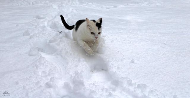 A Tour In The Fresh Snow ❅
