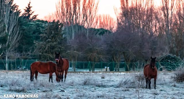 caballos de la aldehuela