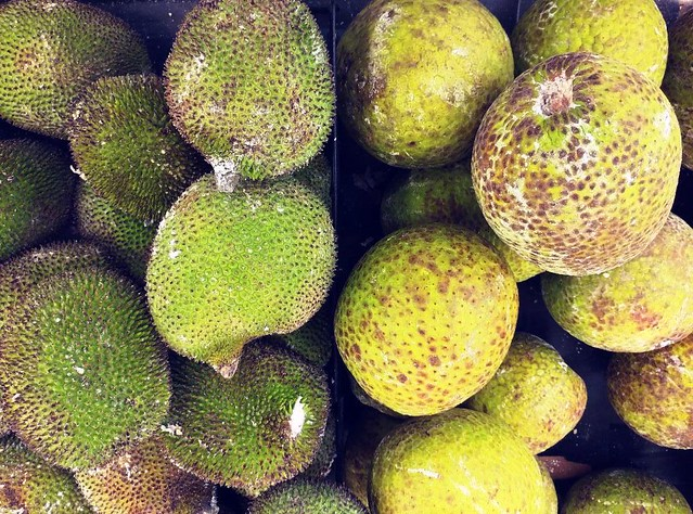 BREADNUT - BREADFRUIT