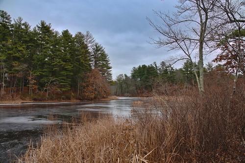 tree pond lake wetland marsh swamp grass winter fosterspond goldsmithreservation reflection bushes cloudy landscape frozen