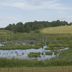 Marsh, 23.06.2020.