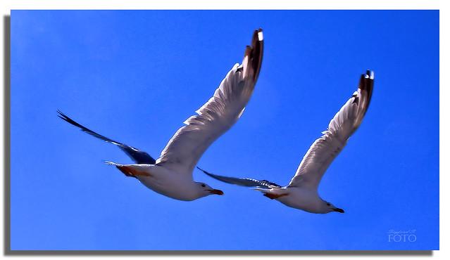 Guten Flug - Have a good flight