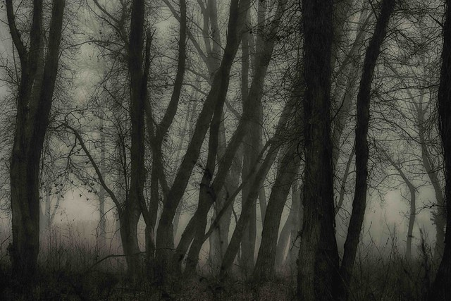 la selva oscura