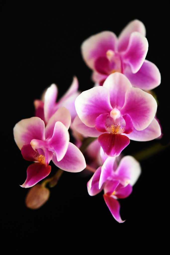 Orchideenblüten 15