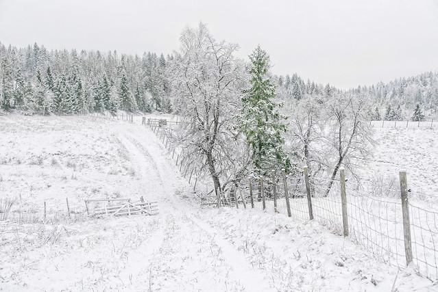 Hiking along the field in winter wonderland, Hølen, Norway